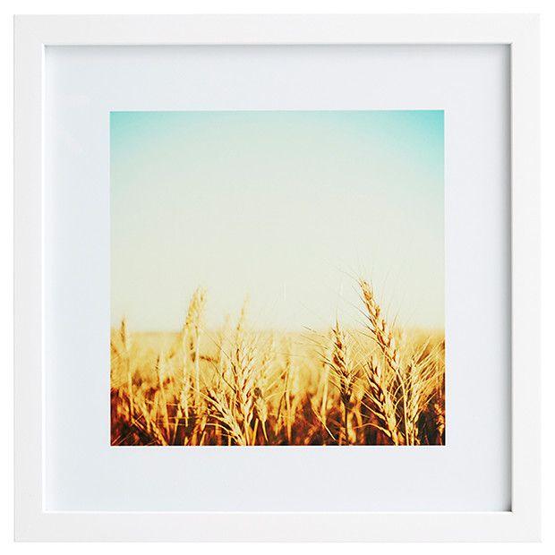 Field 40 x 40cm Wall Print Target
