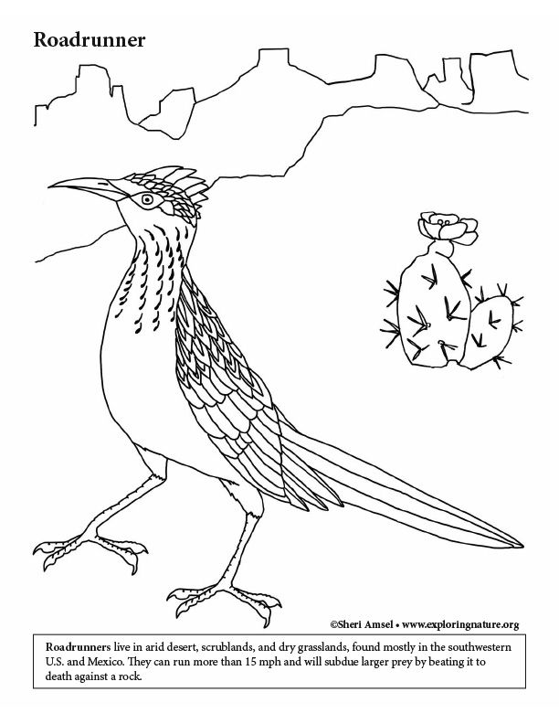 Roadrunner Coloring Page Coloring Pages Color Color Activities