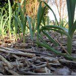 1000 ideias sobre calendrier des semis no pinterest le for Jardin que planter en novembre