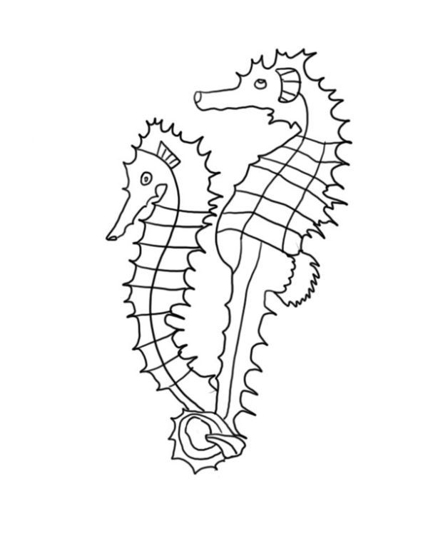 Seahorse Coloring Pages Printable Horse Coloring Pages Animal Coloring Pages Detailed Coloring Pages
