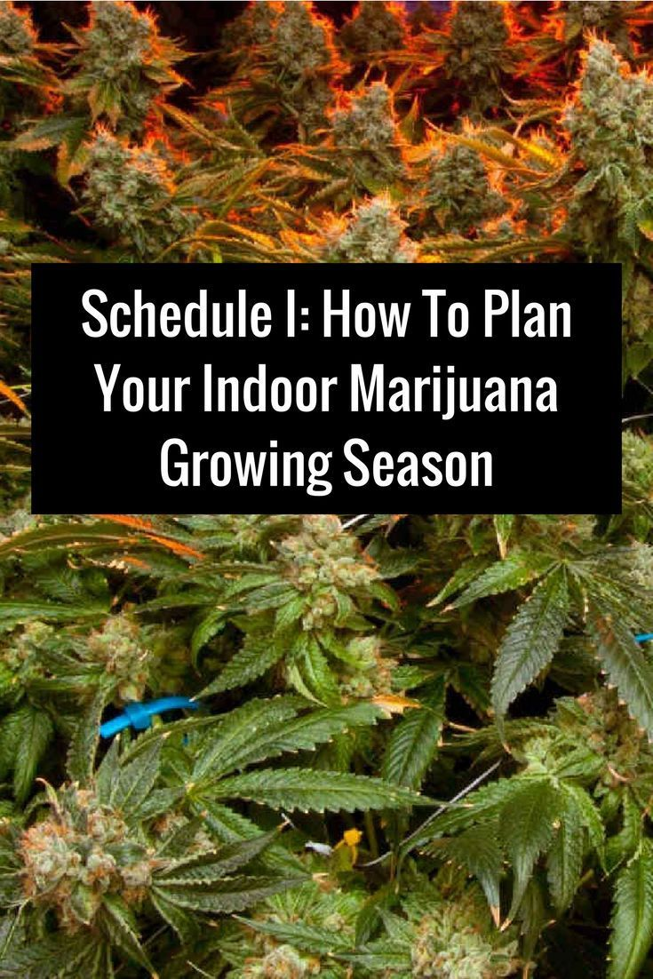 95 best gardening images on pinterest candy gardening and house cannabis medical marijuana project info maritimevintage note this does not constitute nvjuhfo Image collections