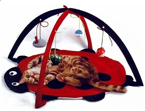 Cats Toys Ideas - Cats need to be active but sometimes we dont have time to play with them. This ladybug cat activity center is perfect for those times.... - Ideal toys for small cats