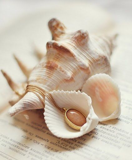 peach sea shells scroll - photo #28