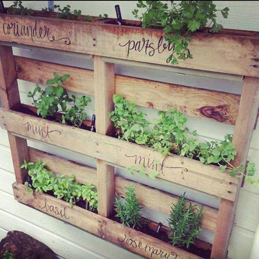 Herbs in a pallet