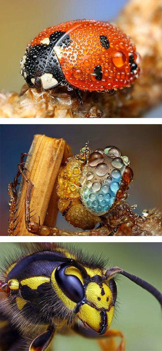 Increíble. Macro. Animal. Insectos.