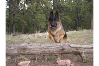 How to Train a Dog With German Commands | eHow