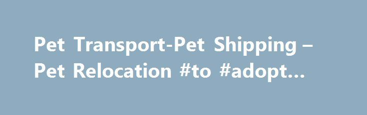 Pet Transport-Pet Shipping – Pet Relocation #to #adopt #a #dog http://pet.remmont.com/pet-transport-pet-shipping-pet-relocation-to-adopt-a-dog/  The Best Dog and Cat Transport Dogs and cats are considered to be among the most favorite pets that most people have. It s just so amazing to have a dog and a cat as pets in your home. For one reason or the other, you might want to transport your [ ] Shipping Pets With A Pet Shipping Service For Animal Transport Animal Delivery With Pet Movers . Get…