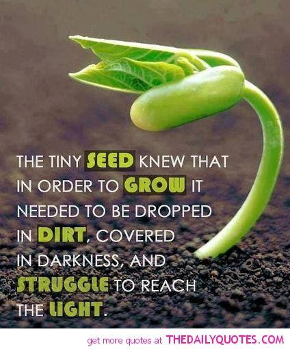 Faith like a mustard seed...