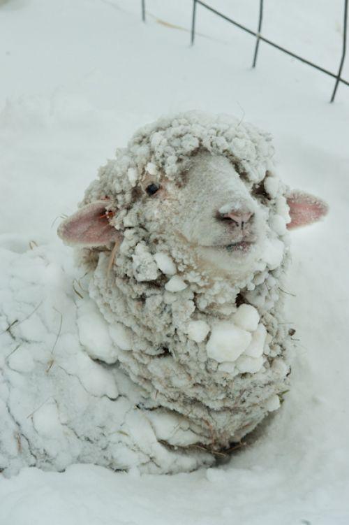 Ni la lana le quita el frío :'v