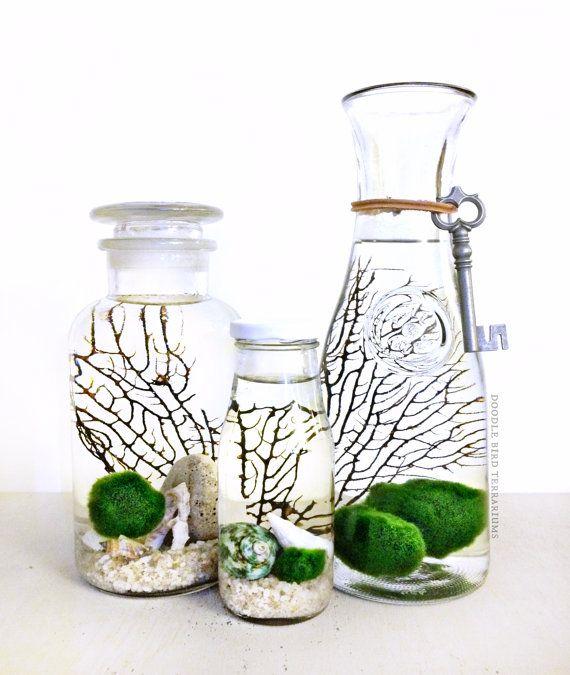 110 besten marimos bilder auf pinterest wasserpflanzen aquarien und gr n. Black Bedroom Furniture Sets. Home Design Ideas