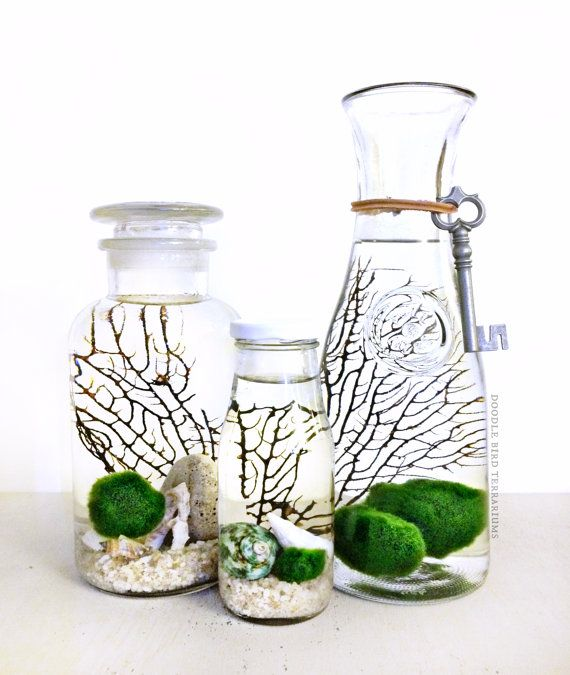 25 best ideas about marimo on pinterest marimo moss for Moss balls for fish tanks