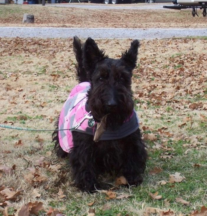 Maggie Aka Mag Pie In Her Pink Argyle Coat Oklahoma City Rv Trip