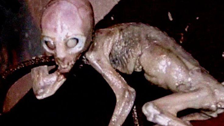 10 монстров из кино существующих в реальности, монстры, топ, монстры из кино, топ 5, животные, чудовище, top 5, топ 10, монстры из фильмов, гигантские монстры, чудовища, топ монстров, 10 монстров, страшные монстры, фильмы про монстров, самые опасные животные, самые странные существа планеты, самые страшные существа, top 10, top, огромные монстры из фильмов, гигантские чудовища, чудовища из фильмов, жуткие монстры, никола тесла