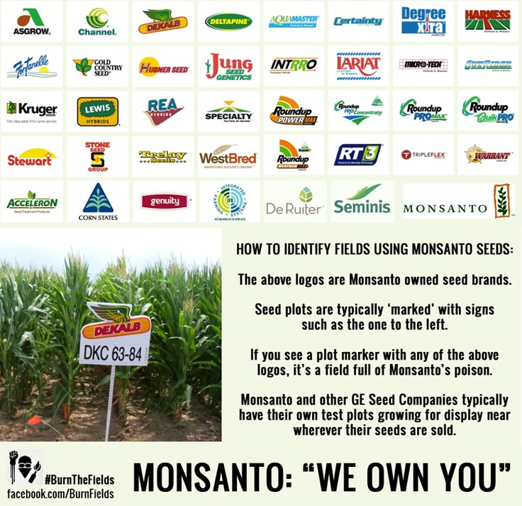 at the stand: genetically modified foods essay On sunday, october 27, new leaf market co-op will donate five percent of sales  to the non-gmo project join us in our stand to demand for gmo labeling and.