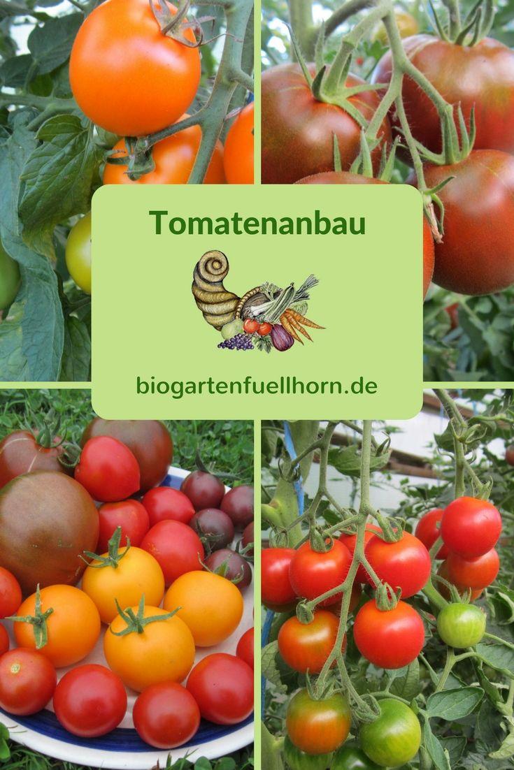 Tomatenanbau Tomatenanbau Tomaten Garten Tomaten Anbauen