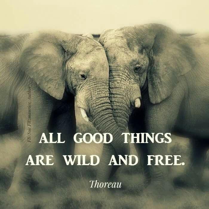 Wild at heart: