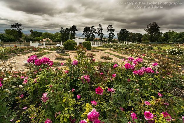 Durbanville Rose Garden. Open Daily and entry is free.