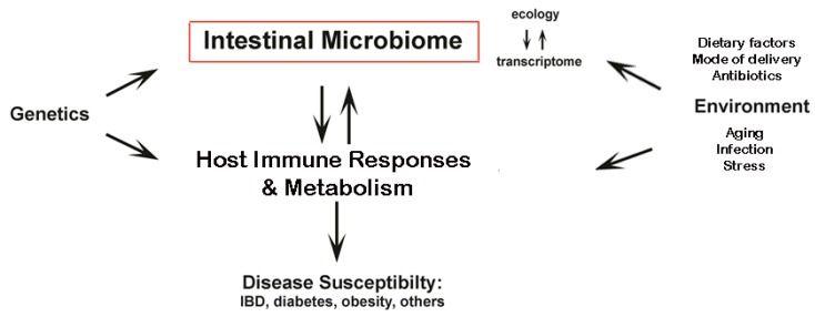 Best 25 Microbiota Ideas On Pinterest Gastrectom 237 A En