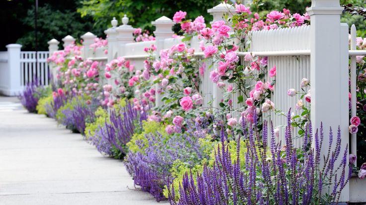 Скачать обои сад, ограда, забор, белый, цветы, раздел цветы в разрешении 1366x768