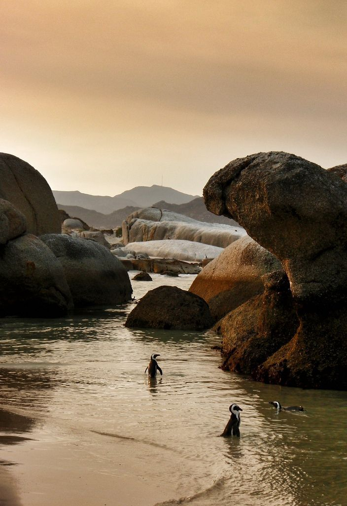 A sheltered cove of soft white sand, massive granite boulders and-being on the Indian Ocean side of the Peninsula-water that's a little warmer than the icy temperatures of Cape Town's Atlantic Ocean beaches.