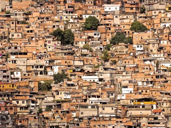 Papagaio. Belo Horizonte.