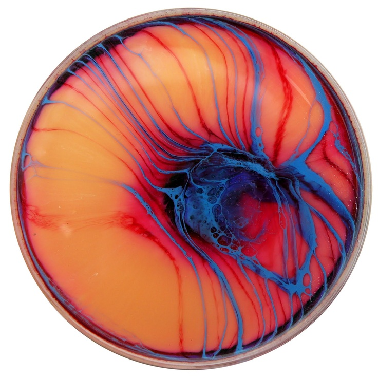 Daily [Petri] Dish. #science #beautiful