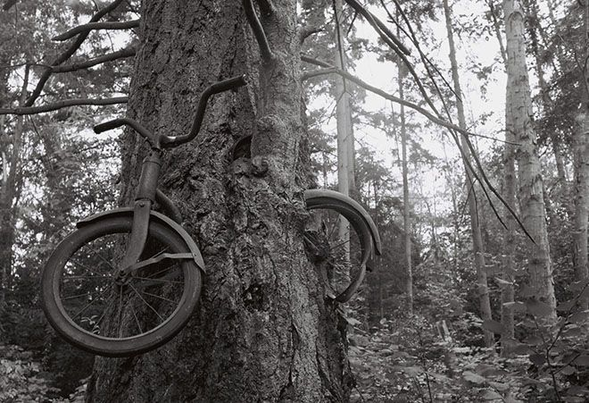 In 1914, a young man leaned his bicycle against a tree, left Vashon Island, Washington, and went off to war, never to return. The tree did what trees do, and two became as one. So goes the legend of Vashon's infamous tree bike — a poignant, romantic, tragic story.: Vashon Infamous, Tragic Stories, Left Vashon, Vashon Islands, Trees Bikes, Young Man, 1914, Man Lean, Infamous Trees