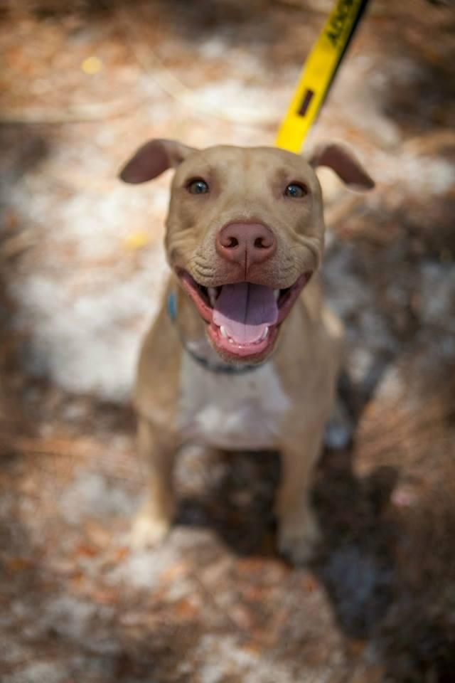 Dog Rescue Fort Myers Fl