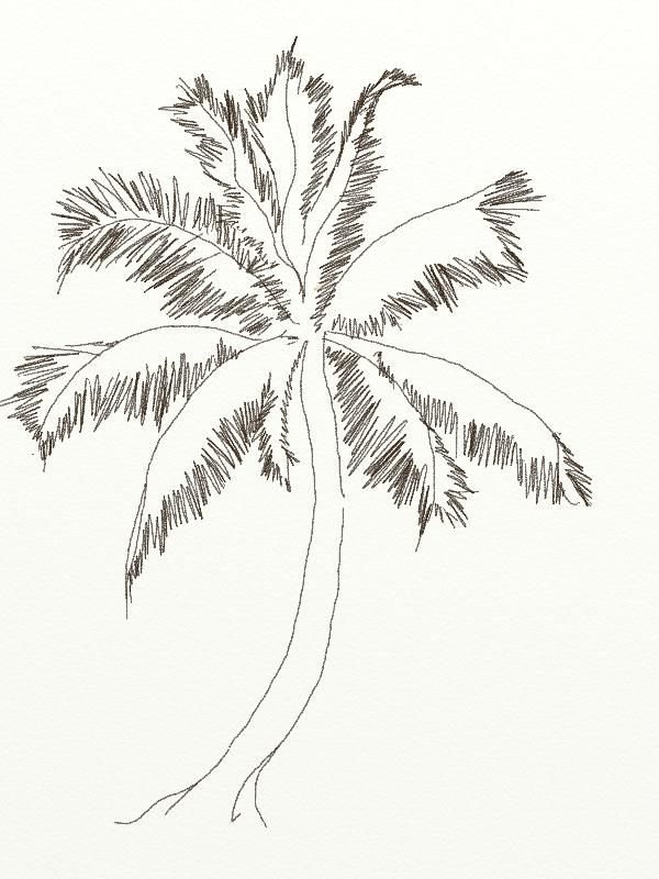 palm tree with coconuts drawing - photo #3