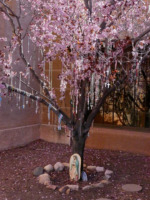 Rosaries and pink blossoms - At the entrance to the Loreto Chapel in Santa Fe, New Mexico, people have hung rosaries like Christmas ornaments on a blossoming plum tree.