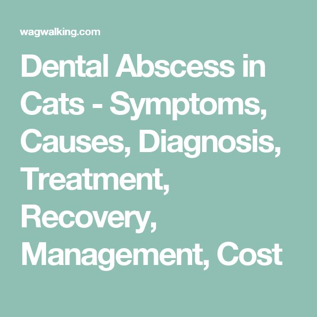 Dental Abscess in Cats - Symptoms, Causes, Diagnosis, Treatment, Recovery, Management, Cost