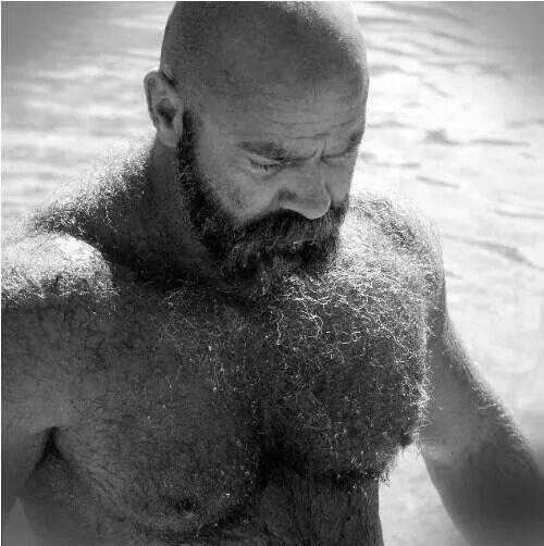 hairy chest - sexy muscle - mature men