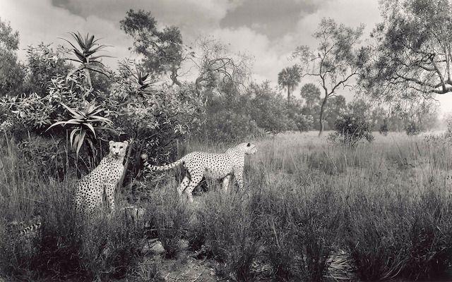 Animals in Black And White – Fubiz™