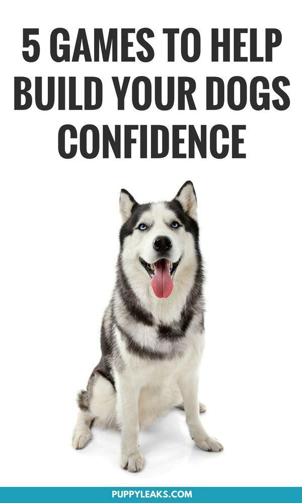 5 Confidence Building Games For Dogs Dog Training Dog Care Tips