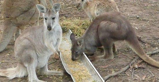 Fraser Coast Wildlife Sanctuary Inc., Maryborough, Queensland