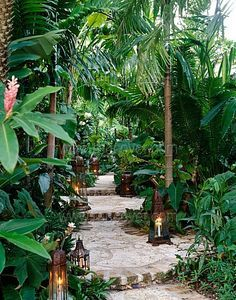 Tropical garden with walkway... If only I lived somewhere where the climate could support this foliage!!                                                                                                                                                      More                                                                                                                                                                                 More