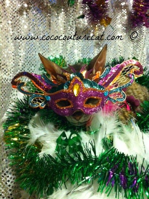 Coco, the Couture Cat: Fashion Friday, Mardi Gras Style!