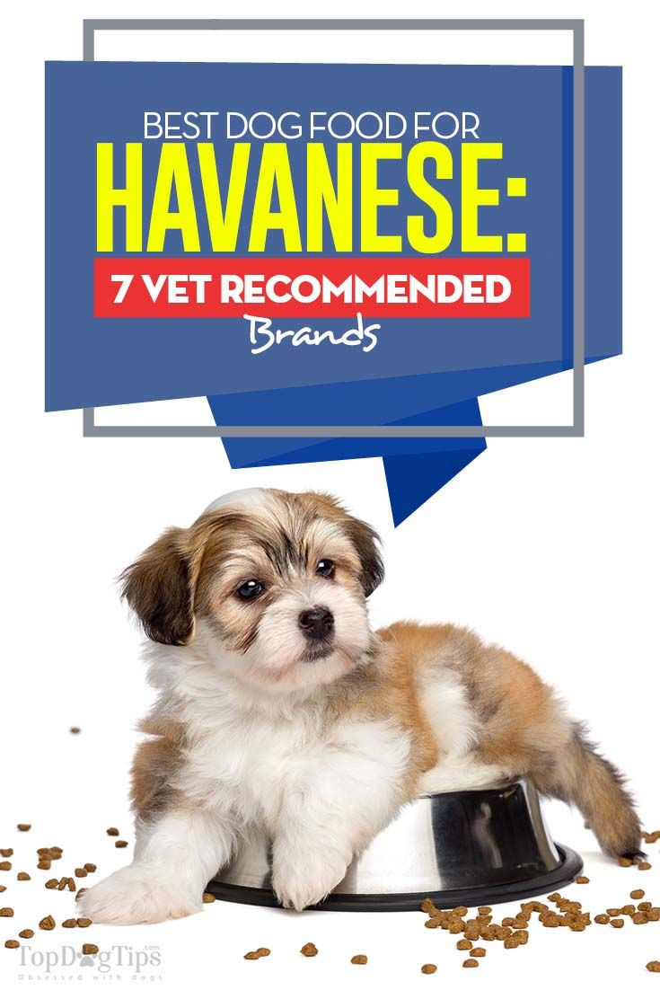 The 7 Best Dog Foods For Havanese Best Dog Food Havanese Best
