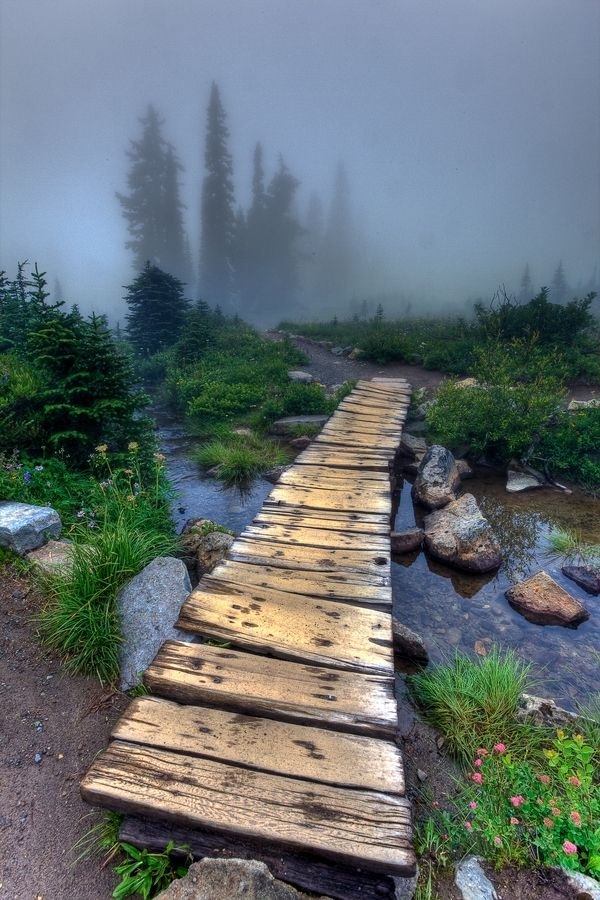 Foggy day along trail at Tipsoo Lake on Mt. Rainier