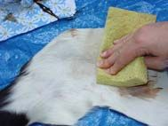 Cowhide cow skin rug care and cleaning expert instructions made easy