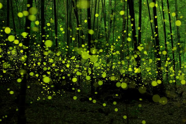 "Last Dance of the Fairies by yume . on 500px | ""Photographer Yume Cyan has been shooting some magical long exposure photographs of fireflies in a forested area around Nagoya City, Japan. By keeping the camera's shutter open at a low aperture Cyan captures every bioluminescent flash of each insect resulting in dotted light trails that criss-cross the frame"""