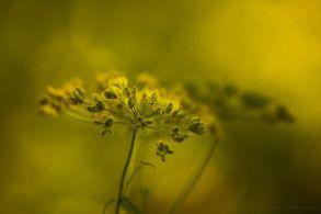 Erdőalji varázslat a Mátrából. Nature photography from Mátra Mountains, Hungary. #plants #light #nature #photography #forest