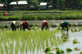 http://www.timeswings.com/top-10-news/kharif-crop-can-go-down-by-7govt-says/