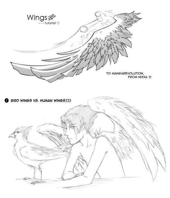 141 best images about To draw on Pinterest | Wings ...