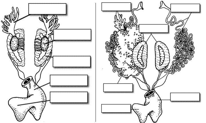 31 best Homeschool Unit Study: Frogs images on Pinterest
