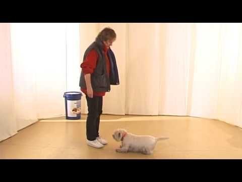 Команда Место - Дрессировка собак дома с нуля