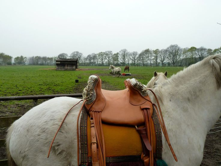 1000 images about historical riding saddles of europe on