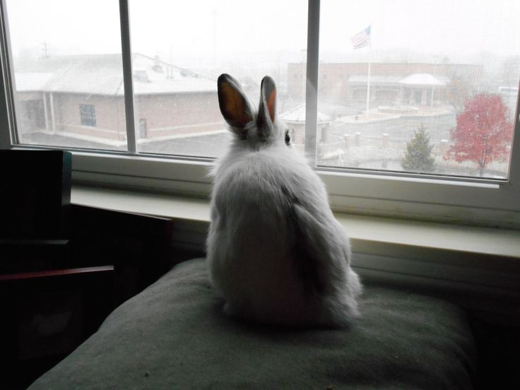 Luigi The Bunny watching his first snowfall.