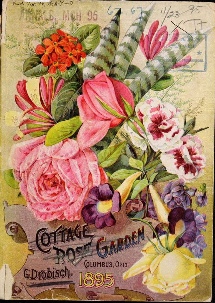 17 Best images about Seed Packets Catalogues and Advertising on