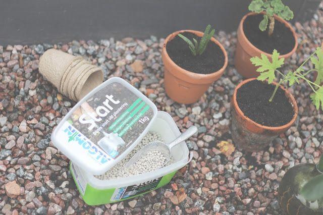 """Tips! Plantera perenner nu på hösten. Ta hjälp av ett bra """"start-gödsel"""" som detta från Algomin för att de ska rota sig bra nu under hösten innan vintern kommer - BY JO WITH LOVE"""
